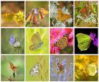 Collage von Schmetterlingen