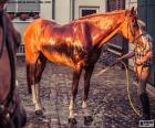 Ein Pferd zu waschen