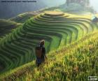 Reisterrassen, Thailand