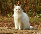 Weiße Katze sitzend