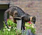 Katze auf einem Zaun