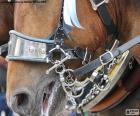 Ein Pferd Zaumzeug
