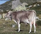 Kuh im Hochgebirge