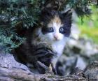Versteckten Kätzchen
