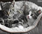 Zwei niedliche Kätzchen