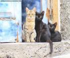 Katzen an der Tür