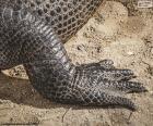 Krokodilsfuß