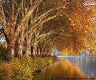 Bäume am See im Herbst