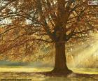 Laubbaum im Herbst