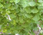 Ginkgo Biloba Blätter puzzle