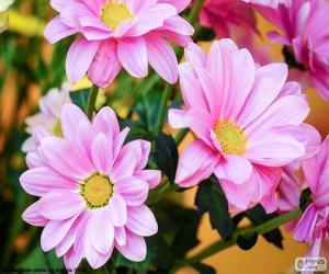 Rosa Gänseblümchen puzzle
