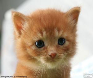Süße Kätzchen puzzle