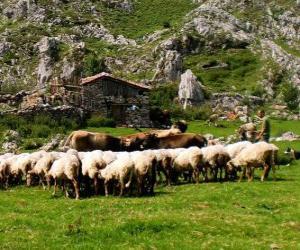 Schäferei tendenziell seine Herde puzzle