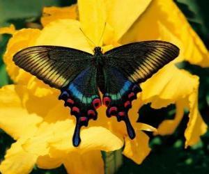 Schöne Schmetterling auf einer gelben Blume puzzle