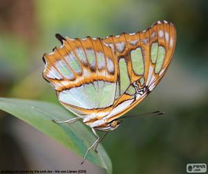 Schöne Schmetterling puzzle