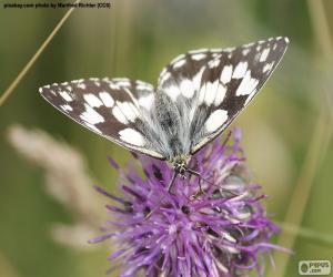 Schachbrett Schmetterling puzzle