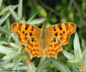 Schmetterlingsflügel öffnen puzzle