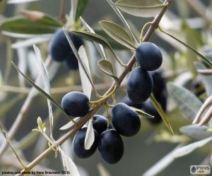 Schwarze Olive branch puzzle