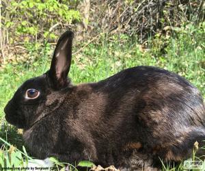 Schwarzes Kaninchen puzzle