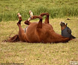 Schwelgen Pferd puzzle