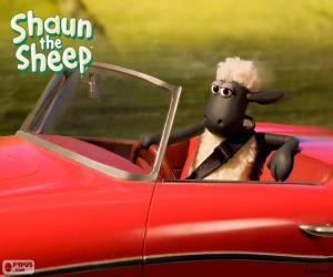 Shaun, Autofahren puzzle