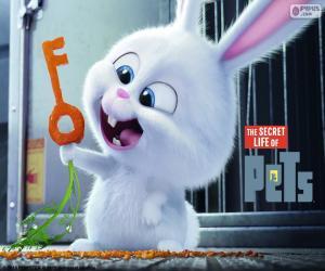 Snowball, ein weißen Kaninchen puzzle
