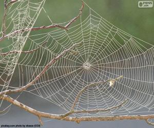 Spinnennetz puzzle
