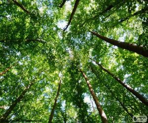 Spitzen der Bäume puzzle