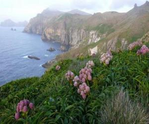 Subantarktischen Inseln, bestehend aus den Inseln des Snares, Bounty, Antipoden, Auckland und Campbell, befindet sich im südlichen Ozean, südöstlich von Neuseeland. puzzle