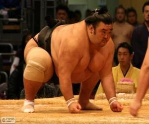 Sumo-Ringer kampfbereit puzzle