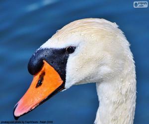 Swan-Kopf puzzle