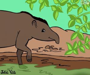 Tapir, Julieta Vitali puzzle