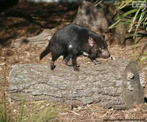 Tasmanischer Dämon puzzle
