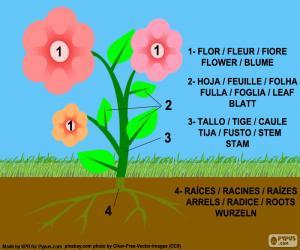 Teile der Pflanze puzzle