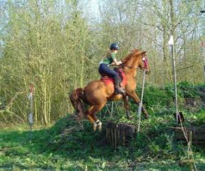 TLG Pferdesport Wettbewerb, prüft die Verständigung zwischen Pferd und Reiter durch verschiedene Tests. puzzle