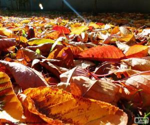 Trockene Blätter im Herbst puzzle