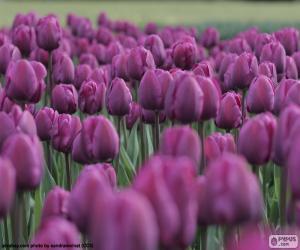 Violette Tulpen puzzle