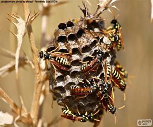 Wasp Schwarm puzzle