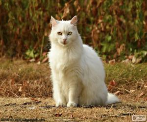 Weiße Katze sitzend puzzle