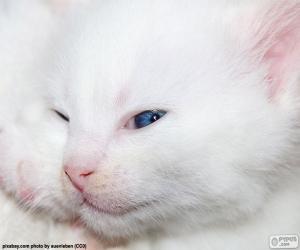 Weiße Katzengesicht puzzle