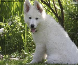 Weißer Schweizer Schäferhund Welpe puzzle