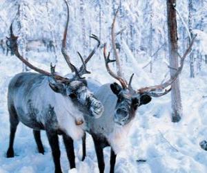 Weihnachten Rentier im Wald puzzle