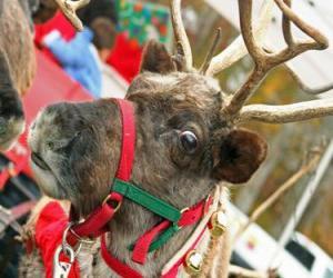 Weihnachten Rentier mit einem Kragen mit glocken puzzle