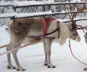 Weihnachten Rentiere ziehen den Schlitten puzzle
