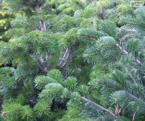 Weihnachten Tannenbaum schmücken puzzle