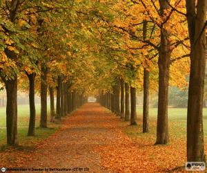 Weise unter Bäume im Herbst puzzle