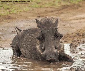 Wildschweine im Schlamm puzzle
