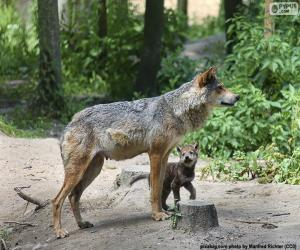 Wolf und Zucht puzzle