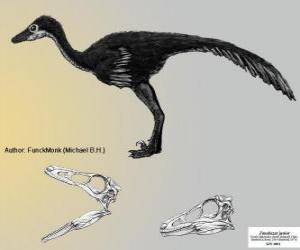 Zanabazar zählt zu den größten bekannten Troodontiden, mit einem Schädel von 272 mm puzzle