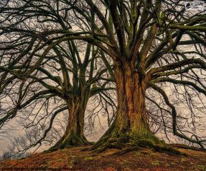Zwei alte Bäume puzzle